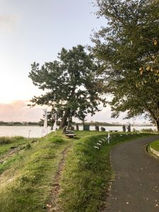 鳥屋野潟(清五郎一本松)